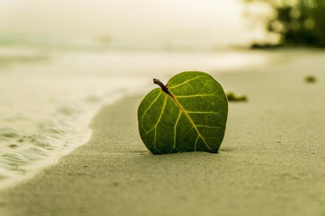 beach-394503_1920