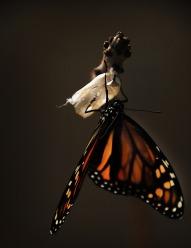 butterfly-1518060_1920